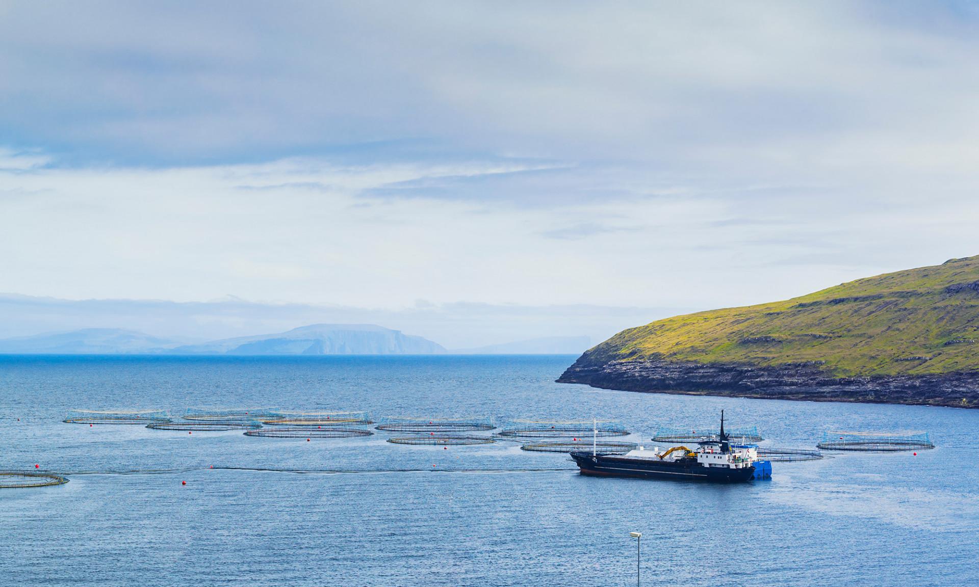 Färöer Lachs